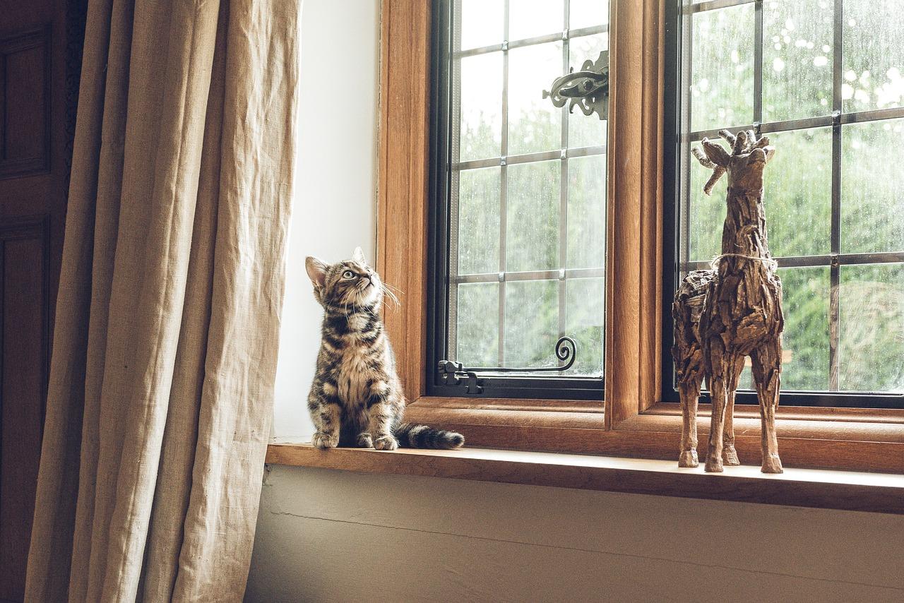 Guide pour bien choisir ses fenêtres